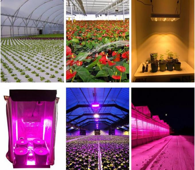 205Watt Full spectrum LED indoor Grow Lights with timing system, CREE COB leds grow light