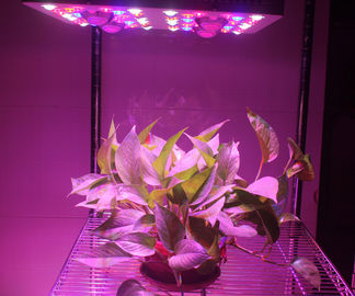 China 620 Watt(UV/IR) LED Grow Lamp Lights 3000k Blue And Red 5W Diode , 120V Power Cord supplier