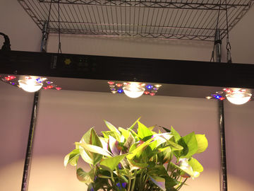 China Dimmable COB LED Grow light 300W / Gardening timmer system CREE CXB 3590COB supplier