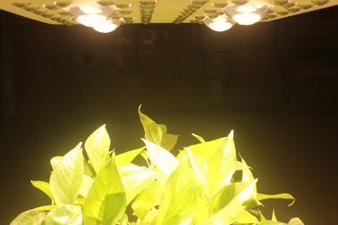 China 415W LED Grow Lights Full Spectrum Growing From Vegetate To Bloom , Grow Rooms / Tents distributor